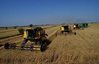 Kuban Again Sets Record on Grain Yield