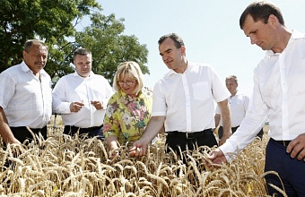 "Veniamin Kondratiev: ""Kuban Beats Records on Grain Crop Harvesting"""