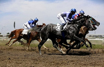 Best Kuban Horse Breeders