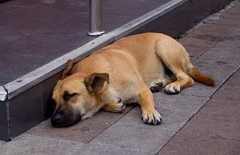 В Сочи построят парк для содержания бездомных животных