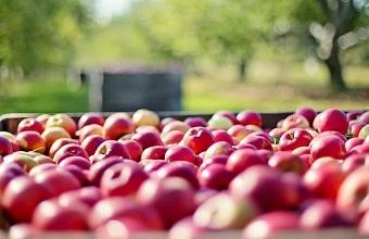 Команда аналитиков «Восток Капитал» подготовила отчет об инвестиционном потенциале садоводства