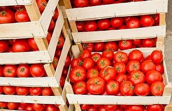 В Каневском районе заработал распределительный центр плодоовощной продукции
