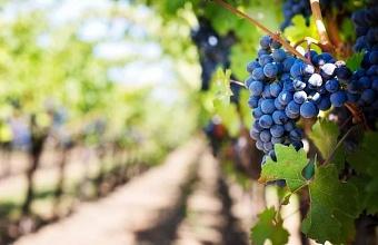 «Кубань-Вино» и «ЦПИ-Ариант» установили рекорд по объему производства