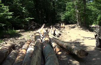 На Кубани возбудили два дела по факту контрабанды леса на 13 млн руб.