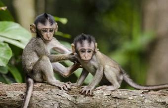 В аэропорту Краснодара задержали 74 обезьяны