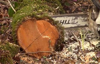 На Кубани задержали директора и бухгалтера предприятия за контрабанду древесины