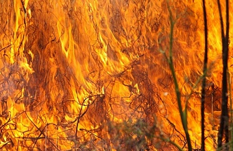 В Краснодаре загорелась трава на площади 250 кв. м.