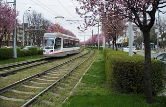 Общественный транспорт Краснодара начинает работать по три часа утром и вечером