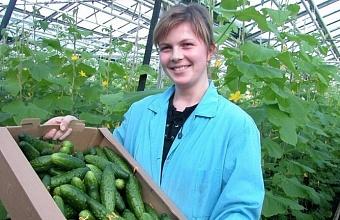 Краевые и местные власти помогают фермерам Кубани наладить сбыт продукции