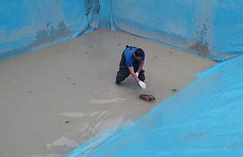 Из затопленного котлована в Новороссийске достали упавшего щенка
