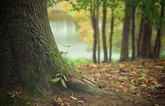 Житель Кавказского района незаконно вырубил лес на 1,3 млн рублей