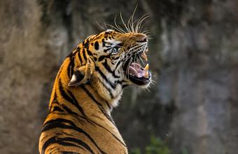 В 12 зоопарках и океанариумах на Кубани выявили нарушения в содержании животных