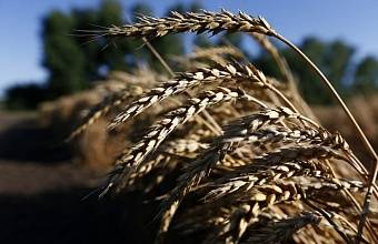 Свыше 2 млн тонн зерна собрали в Краснодарском крае