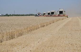 В Краснодаре сохранена высокая урожайность пшеницы