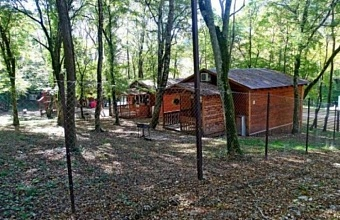 Базу отдыха в лесу под Геленджиком демонтируют