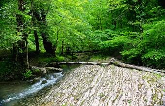 В Сочи спасатели вывели из леса заблудившихся москвичей