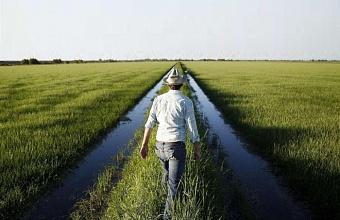 Эксперты ищут способ помочь рисоводам Кубани