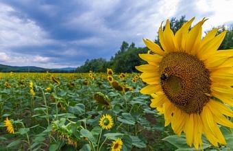 Предприятия-лидеры аграрного туризма Кубани получили более 1 млн рублей грантов