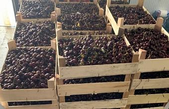Таможенники Краснодара выявили свыше 1,6 тонн санкционных продуктов