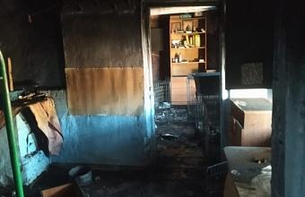 В Темрюкском районе произошел пожар в приюте для животных