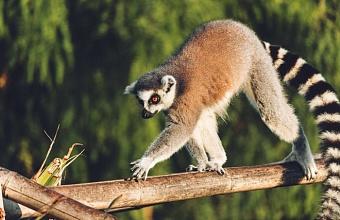 Нарушения еще в одном зоопарке выявили в Краснодаре