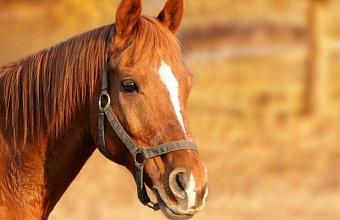 В Динском районе 6-летняя девочка получила травму после падения с лошади