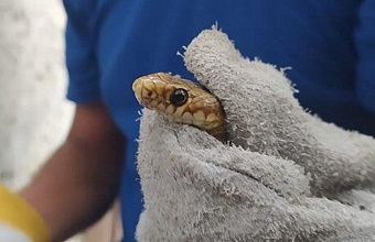 В Новороссийске спасатели вырезали из сетки застрявшую змею