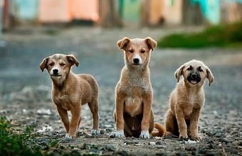 В Краснодаре построят муниципальный приют для животных