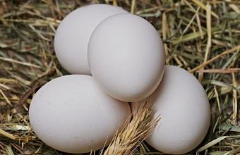 В Армавире уничтожили более 20 тыс. куриных яиц без документов