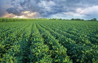 В Краснодарском крае собрали 90% урожая сои