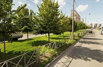 Деревья с ул. Московской в Краснодаре начнут пересаживать в октябре