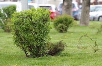 Общественный совет по озеленению города сформирован в Краснодаре