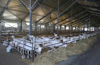 В Адыгее продолжается создание кластера в сфере молочного козоводства