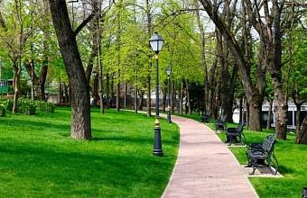 Почему реестр зеленых насаждений по-своему дорог и мэрии, и экологам?