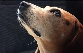 В Краснодаре мужчина жестоко избил собаку