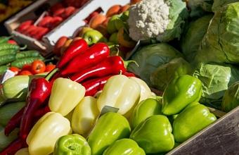Экспорт сельхозпродукции Кубани составит в 2021 году 2,7 млрд долларов