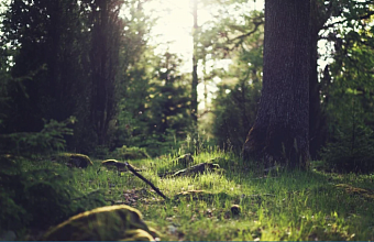 Запрет на посещение лесов на Кубани продлили до ноября
