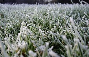 Заморозки до - 1°С ожидаются на Кубани