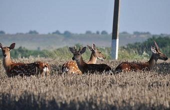Губернатор Кубани подписал постановление о создании природного парка «Маркотх»