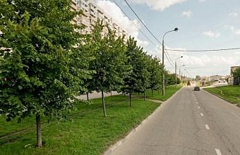 В Краснодаре специалисты начали пересаживать липы с ул. Московской