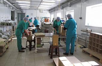 Новый консервный завод построили в Ленинградском районе