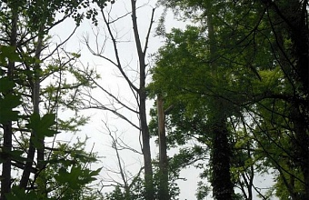 Urgent Help for Valluable Trees