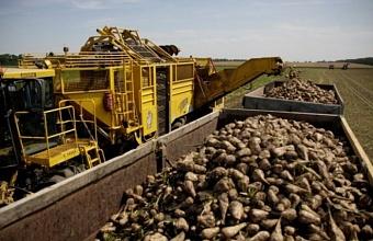Сельскохозяйственный экспорт стал одним из основных направлений роста экономики Краснодарского края