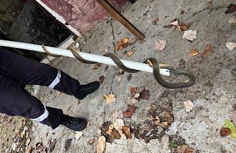 В Крымском районе пять змей заползли в подвал дома