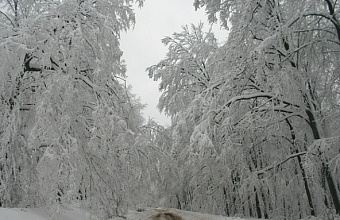 Налипание снега и гололедица ожидаются в предгорье и горах Сочи