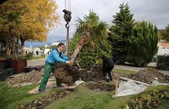 В Геленджике пальмы из кадок пересаживают в открытый грунт