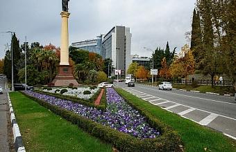 Посадку зимнего ассортимента цветов завершают в Сочи