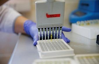 В Краснодаре 56 новых случаев коронавируса