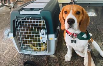 В аэропорту Сочи извинились за инцидент с перевозимой собакой