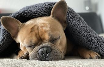 Хозяин брошенной в мусорный бак собаки в Краснодаре считал ее погибшей